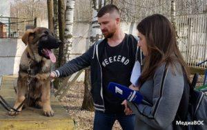 Российская школа собак-проводников ВОС